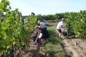 Huvitavaid tegevusi veinimõisates